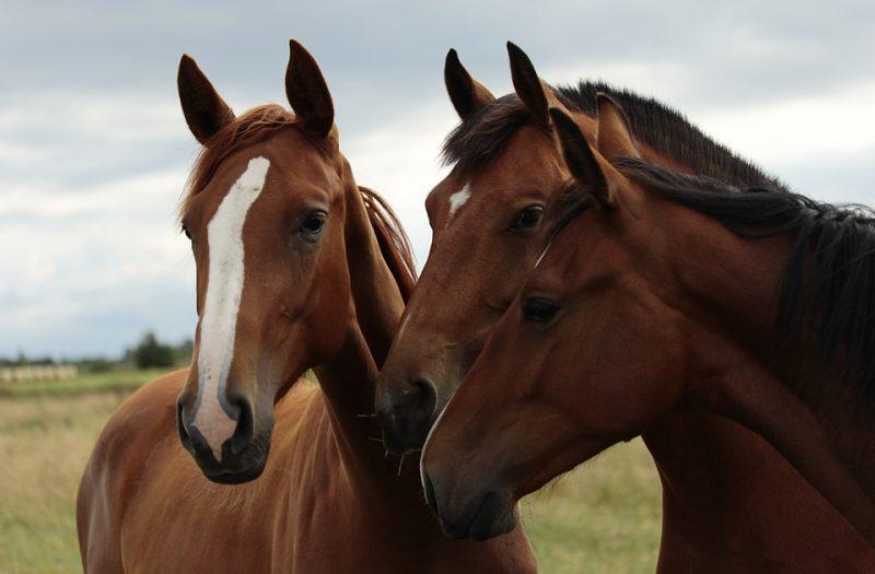 horses-379806_960_720